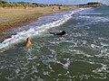 Hengistbury Head - Dogs Paradise - geograph.org.uk - 608066.jpg