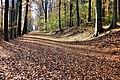 Herbst im Park - Blätter, Bäume, Seeufer und Wege im Wandel der Jahreszeiten. (3).jpg