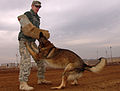 Highlighting K-9 capabilities DVIDS227652.jpg