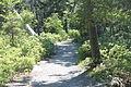 Hiking trail at Jordan Pond, ME IMG 2169.JPG