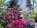 Hillwood Gardens in April (17411396179).jpg