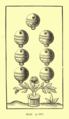History of Playing Cards (1848) 38.png