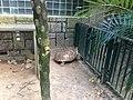 Hong Kong Zoological and Botanical Gardens 09.jpg