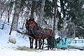 Horse sleigh in Balvanyos - panoramio.jpg