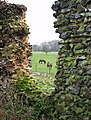 Horses grazing in field beside the ruined St Saviour's church - geograph.org.uk - 1632539.jpg