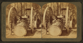 Huge Steam Traction Dray (13 Ft. wheels)hauling logs in a logging camp, California, from Robert N. Dennis collection of stereoscopic views.png
