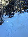 Humphrey's Peak Trail.JPG