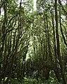 Ilha das Flores P5270241 (35839644842).jpg
