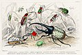 Illustration from A History of the Earth and Animated Nature by Oliver Goldsmith from rawpixel's own original edition of the publication 00072.jpg