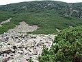 Im Tatras - panoramio (1).jpg