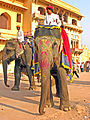 India-6599 - Flickr - archer10 (Dennis).jpg