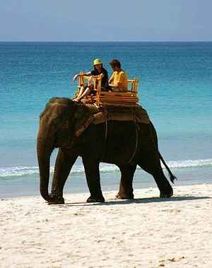 Captive elephants - An elephant carrying tourists sitting on a howda.