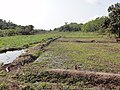 Inland valley rice culivation in Liberia - panoramio (2).jpg