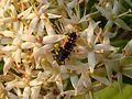 Insekten-Larve.jpg