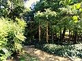 J. C. Raulston Arboretum - DSC06170.JPG
