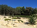 Japan Lane, Japanese Garden, and whereabouts 11.jpg