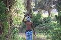 Jeune transportant des fagot de boie2.jpg