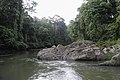Jungle River (11031857394).jpg