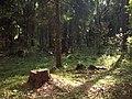 Jurmala Forest (Bulduri) - panoramio - Paul Berzinn.jpg
