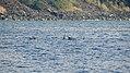 Kealakekua Bay, Captain Cook (504520) (23918282316).jpg