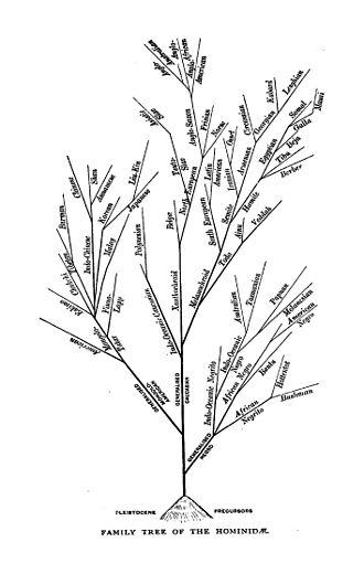 Augustus Henry Keane - Evolutionary tree from Keane's Ethnology (1909).