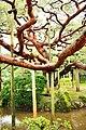 Kenroku-en, Kanazawa (3809931127).jpg