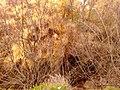 Kifisia, Greece - panoramio (13).jpg