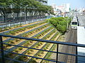 Komagome station, saplings of azalea 2007.JPG