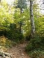 Konina, Poland - panoramio (4).jpg