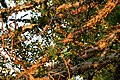 Kruger Park, South Africa (8342047374).jpg