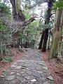 Kumano Kodo pilgrimage route Daimon-zaka World heritage 熊野古道 大門坂25.JPG