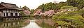 Kyoto banner cherry blossoms 2.jpg
