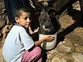 L'âne d'abord!(Ait Attab -Azilal).jpg