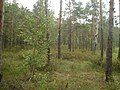 Līksna Parish, Latvia - panoramio - alinco fan (5).jpg