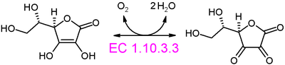 L-ascorbate oxidase reaction.PNG
