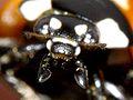 Lady Bug Portrait (2738411748).jpg
