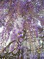 Laika ac Royal Greenhouses of Laeken (6320231525).jpg