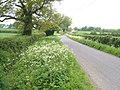 Lane to Batten's Green - geograph.org.uk - 168963.jpg