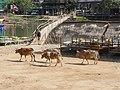 LaosVangVieng013 (46669054774).jpg