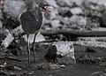 Le Grand Heron 2.jpg