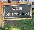 Le Touquet-Paris-Plage 2019 - Avenue des Forsythias (Whitley).jpg