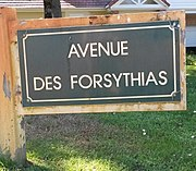 Le Touquet-Paris-Plage 2019 - Avenue des Forsythias (Whitley).jpg