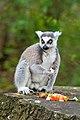 Lemur (35862525724).jpg