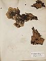 Lichenes Helvetici I II 1842 020.jpg