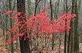 Lingering Autumn (1) (10791899965).jpg