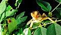 Lizard dinner.jpg