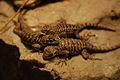 Lizards Alive - Fernbank Museum - Atlanta - Flickr - hyku (9).jpg