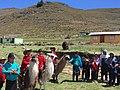 Llama Races in Pachancho.jpg