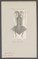 Loligo banksii - - Print - Iconographia Zoologica - Special Collections University of Amsterdam - UBAINV0274 090 04 0005.tif