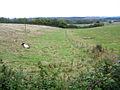 Longhorns taking a rest beside the Greensand Ridge Walk, Clophill, Beds - geograph.org.uk - 64926.jpg